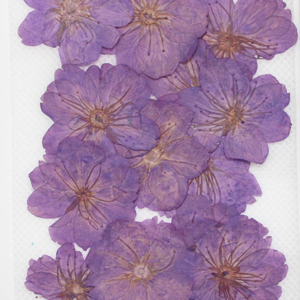 Cerasus sp pressed flowers Pressed plants for nature lovers Floral jewelry 12pcs