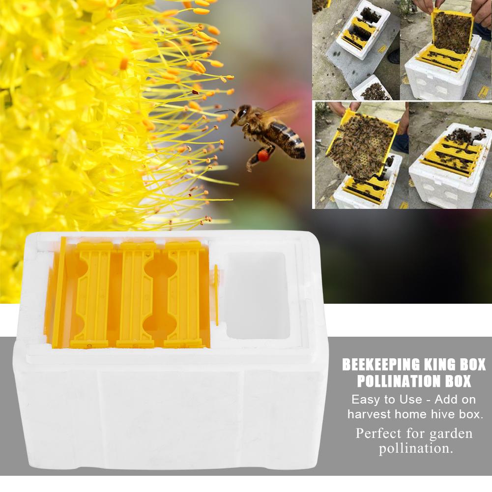 Garden Bee Hive Beekeeping King Box Pollination Box Foam Frames Beekeeping Tools